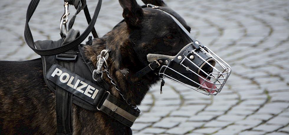 mit herausnehmbarem Giftk/öderschutz schwarz HUNTER ALBURY Hundemaulkorb